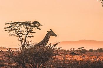 viajes a africa